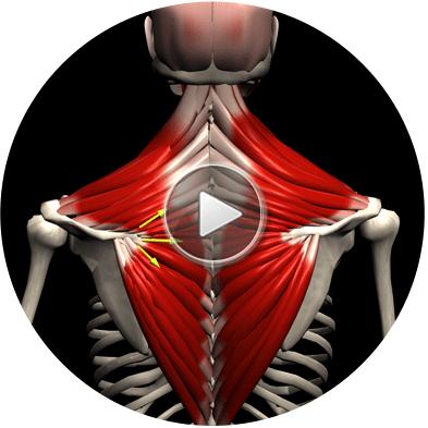 Anatomy app