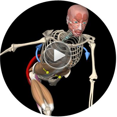 Strength Training   Muscle&Motion - Strength Training Anatomy ...
