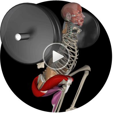Squat_Anatomy