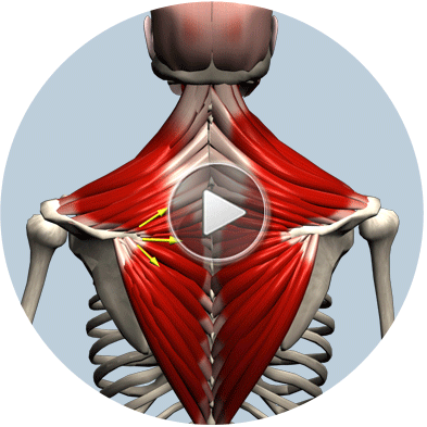 3D Anatomy App: Watch 2000+ unique videos of all muscles in 3D