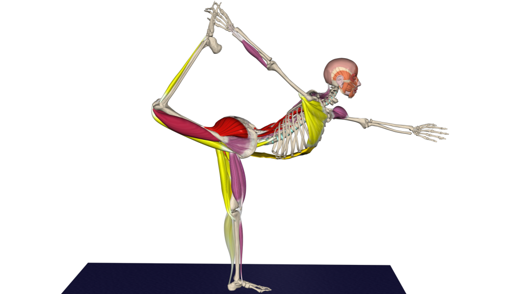 Lord of the dance anatomy